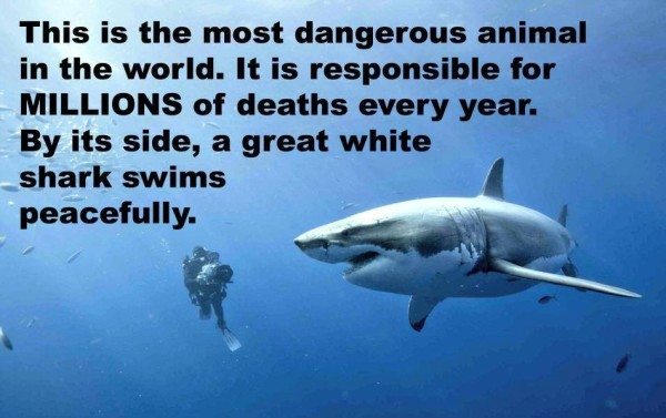 this-is-the-most-dangerous-animal-in-the-world-it-is-responsible-for-millions-of-deaths