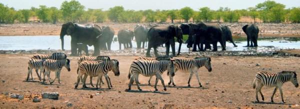 Kruger`s park, South Africa