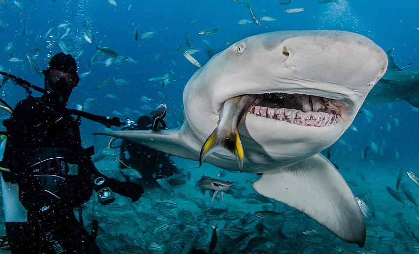 Have hit sharks with people teeth topic, very
